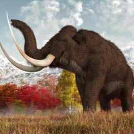 Imagine cu un mamut lânos pe o prajiște, ăn nuanțe de auriu, portocaliu și roșu. Mamutul lânos are blana maro. Experții au încercat să explice de ce ar fi dispărut mamuții