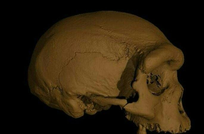Craniu Homo longi, descoperit în China, numit și omul dragon