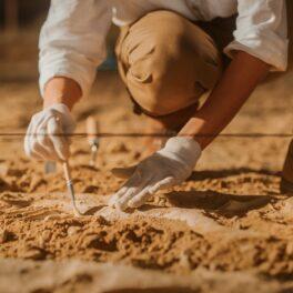 Cel mai vechi obiect din lume a fost cioplit dintr-un os de cerb. Un arheolog a dscoperit oase în pământ