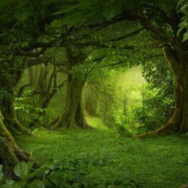 Imagine cu o pădure din Asia de sued-est, foarte verde. Trei copaci mari în imagini, pe margine. Experții studiază cum migrează copacii