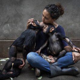 Imagine din concursul Wildlife Photographer of the Year 2021, cu directoarea unui centru de reabilitare și doi cimpanzei, care stau în brațele ei